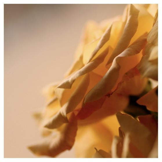 floral12